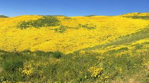 The Timeless Beauty of the Carrizo Plain